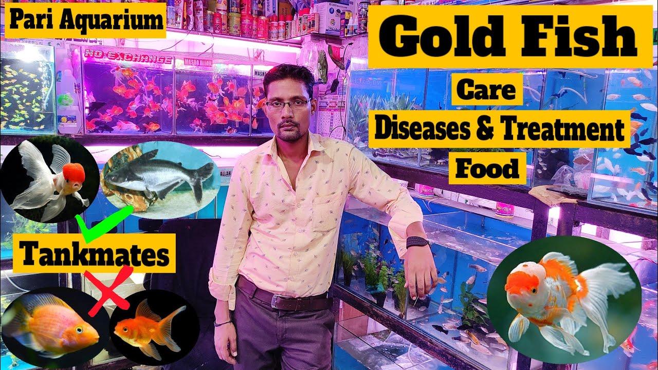Goldfish    Goldfish Care, Goldfish Tankmates, food, Filter    Pari Aquarium, Kurla fish Market
