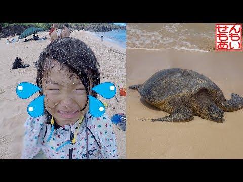 ワイメア・ビーチとウミガメ観察 Waimea Beach And Sea Turtle Watching