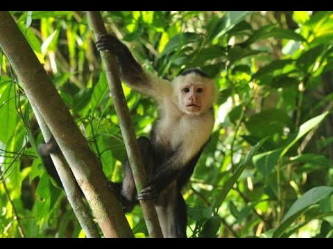 Jungle Sounds With Relaxing Thunderstorm Monkeys Birds Rain 4Hrs Long