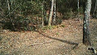 Un lupo insieme ad un ibrido lupo-cane ripresi da telecamera nascosta