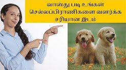 Don't grow your pets here as per  vastu for pets in home | vastu pet animals in tamil