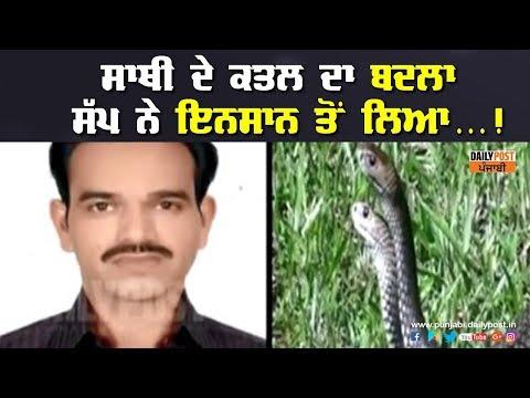 ਸੱਪ ਨੇ ਲਿਆ ਇਨਸਾਨ ਤੋਂ ਆਪਣੇ ਸਾਥੀ ਸੱਪ ਦਾ ਬਦਲਾ ! Sanke Revenge |Daily Post Punjabi