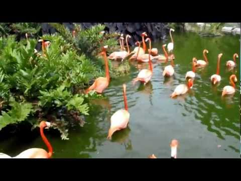 Flamingos...the noise was hard to believe! Jungle Island. Miami.