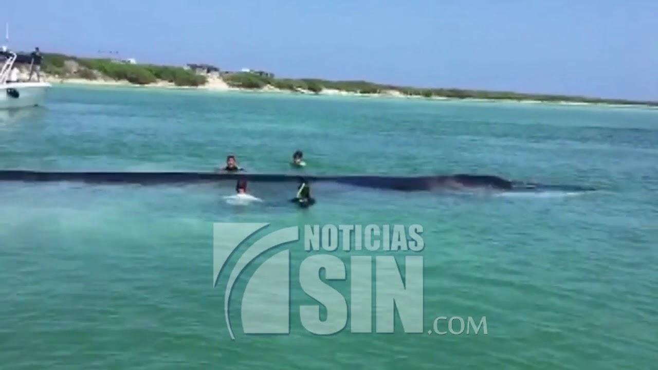 Decenas de personas se unen para rescatar ballena varada en México