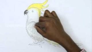 How to Draw a Cockatiel