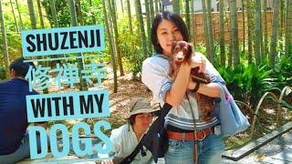 修禅寺|犬とぶらり
