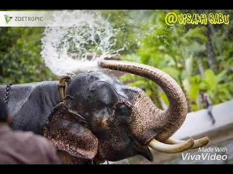 Vandodi Padi Vilayum What's App Status