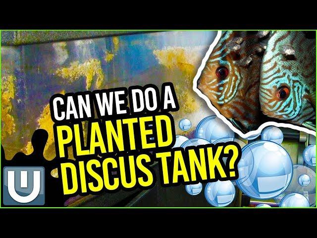 Discus Planted Tank - Resurrecting a 120 Gallon Tank