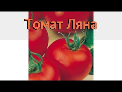 Томат обыкновенный Ляна (lyana) 🌿 обыкновенный томат Ляна обзор: как сажать, семена томата Ляна