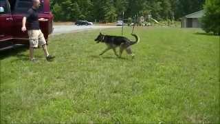 Load Up! | 3 Year Old German Shepherd | Dog Training Newnan