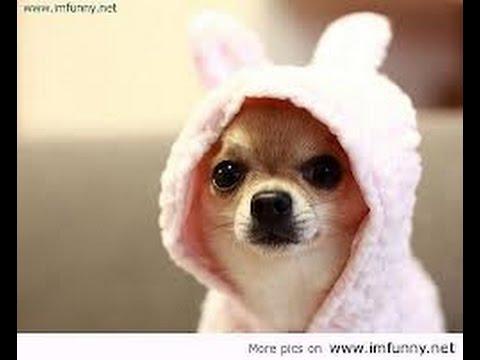 Cute dog cries like  human baby