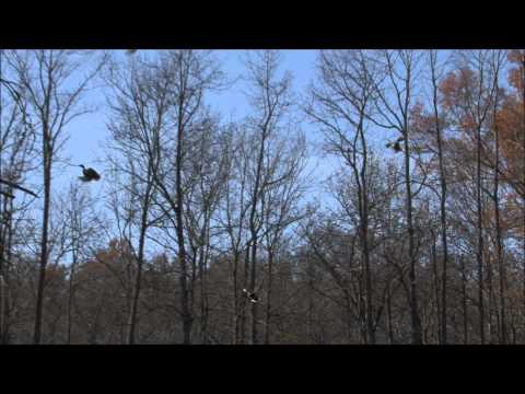 Duck Season 2011 Mississippi