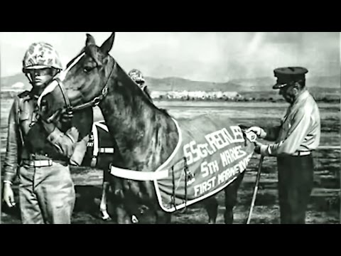 Staff Sergeant Reckless • Marine Corps War Horse - Hero from YouTube · Duration:  3 minutes 28 seconds