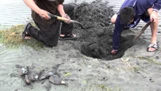 熟练的象拔蚌挖掘者