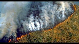 ماذا لو فقدنا غابات الأمازون !!