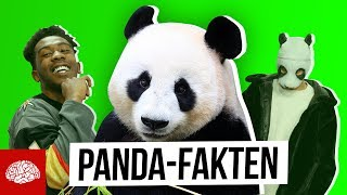 Fakten über die bedrohte Tierart Panda
