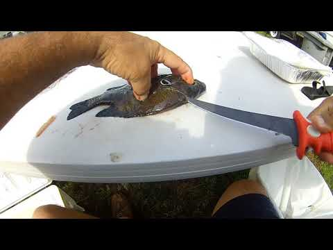 How To Fillet Shellcrackers (Redear Sunfish)