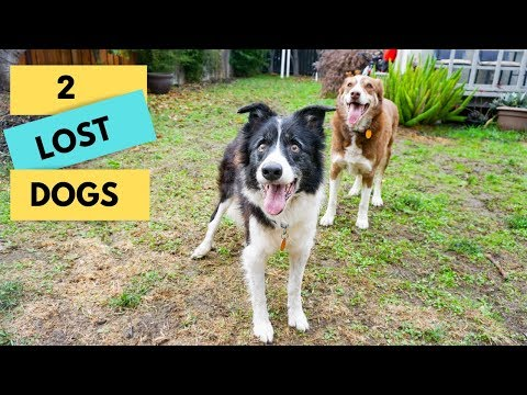 We found two LOST DOGS!
