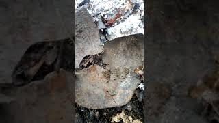 Приключения Пахи лопаты и Стаса в лесу в блиндаже с советской каской.