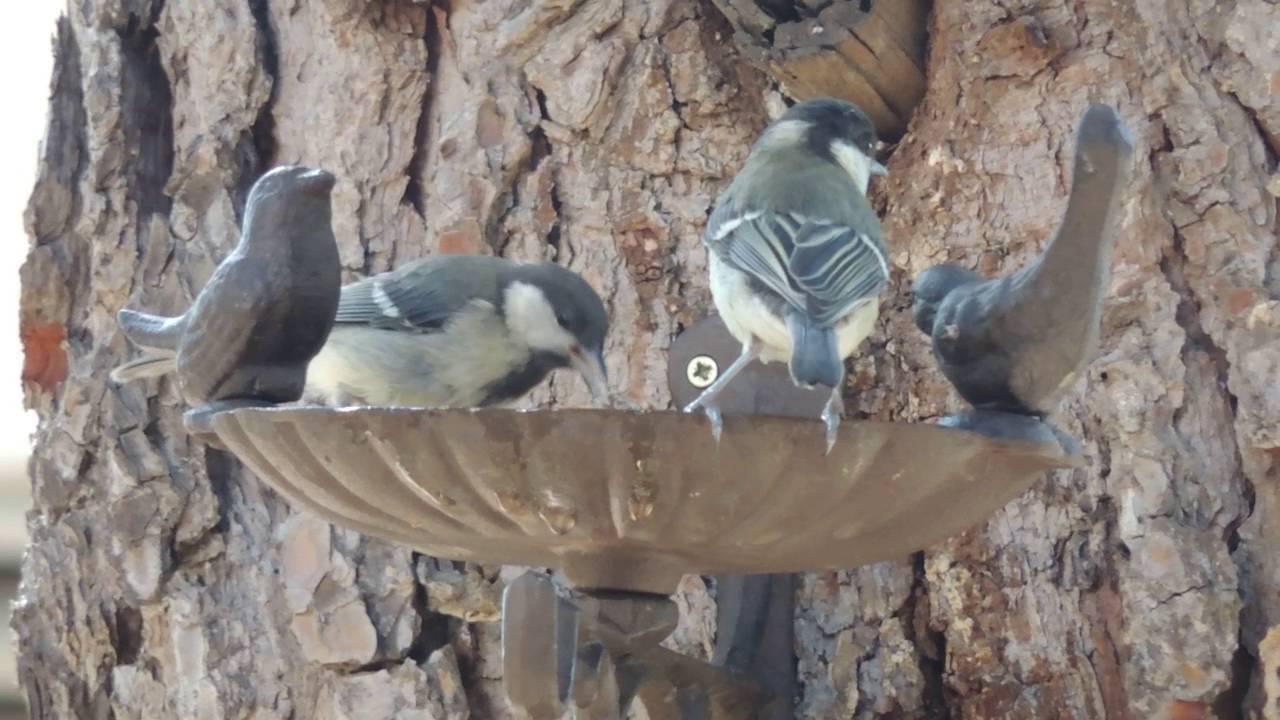 Bebedero ba era para aves silvestres youtube for Bebederos para aves jardin