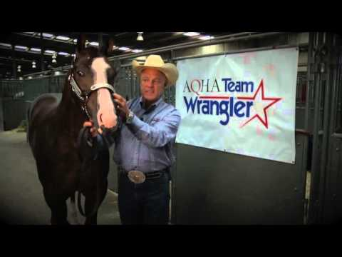 How To Fit A Show Halter
