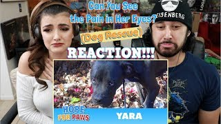 Can You See the Pain in Her Eyes? | Hope for Paws DOG RESCUE - REACTION!!!