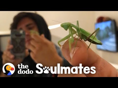 Man and Praying Mantis Become Best Friends | The Dodo Soulmates