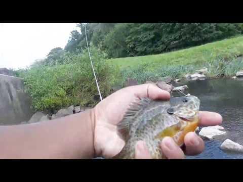 Panfishing The Spillwayyyy!!! :D (Livestreamed 08/01/17) (Warrington, PA)