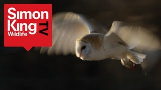 How to Get a Close View of a Barn Owl - Amazing Trick!