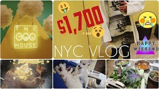 Will(윌) - DO NOT WATCH ON AN EMPTY STOMACH (NY) Egg House, noguchi museum, food, doggos VLOG 3