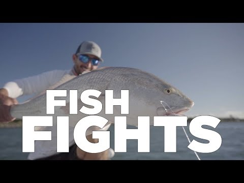 Indian River Redfish And Tarpon
