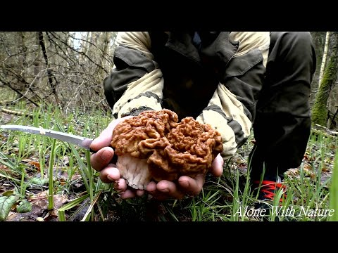 Грибное безумие,грибы в