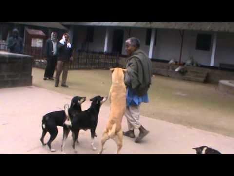 Bangladeshi trained dog squad playing...