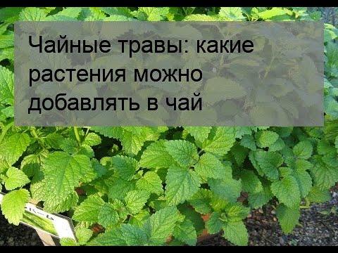Вопрос: Как вырастить в саду травы для чая?