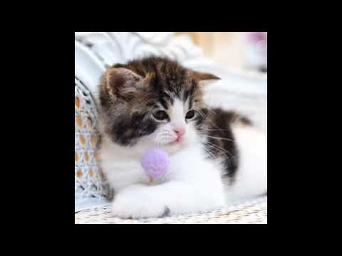 Cute Animals, Dogs And Cats, Funny Video 2