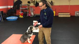 Remote Collar Bungee Clip From Ecollar Technolgy Solid K9 Training