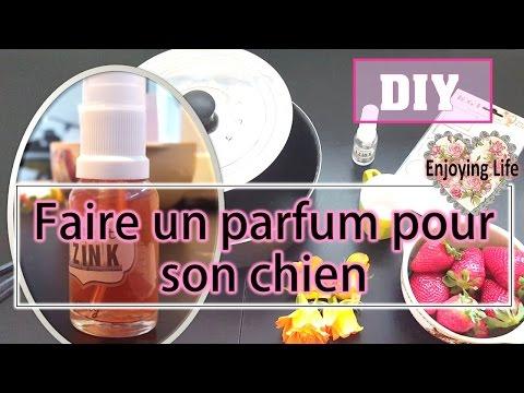 DIY- UN PARFUM POUR MON CHIEN ✿ Enjoying Life