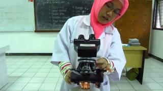 Tutorial - Cara menggunakan mikroskop cahaya (lampu)