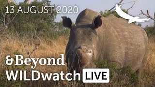 WILDwatch Live | 13 August, 2020 | Morning Safari | South Africa