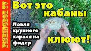 Удачная рыбалка на реке Дон в Липецкой области. Ловля крупного карася на фидер