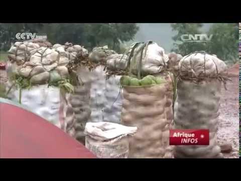 Avocat, culture la plus populaire au Burundi