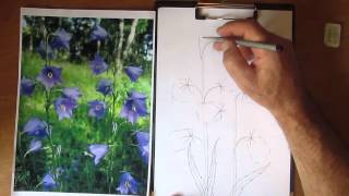 Как рисовать лесной колокольчик. Часть 1. Урок 21