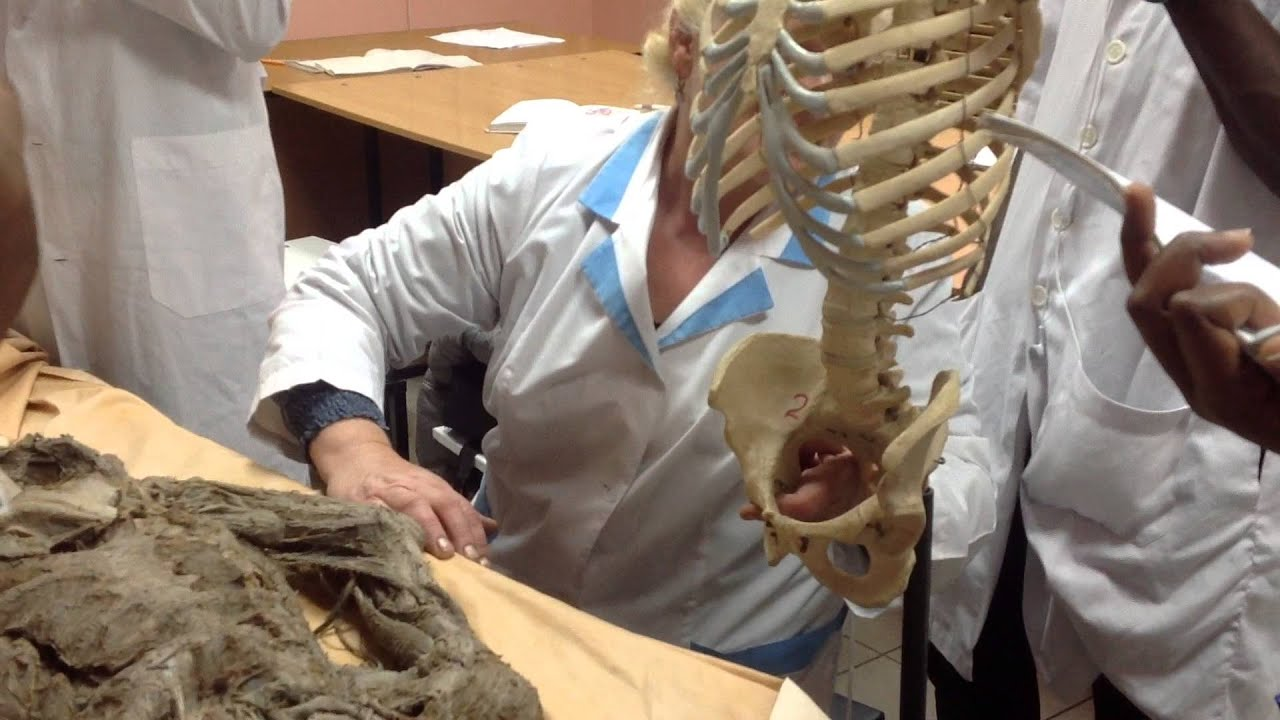 Instructor @ Stony Brook Medicine | Vertebrate Paleontology | Paleowire