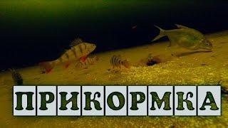 видео Чем прикармливать рыбу зимой?