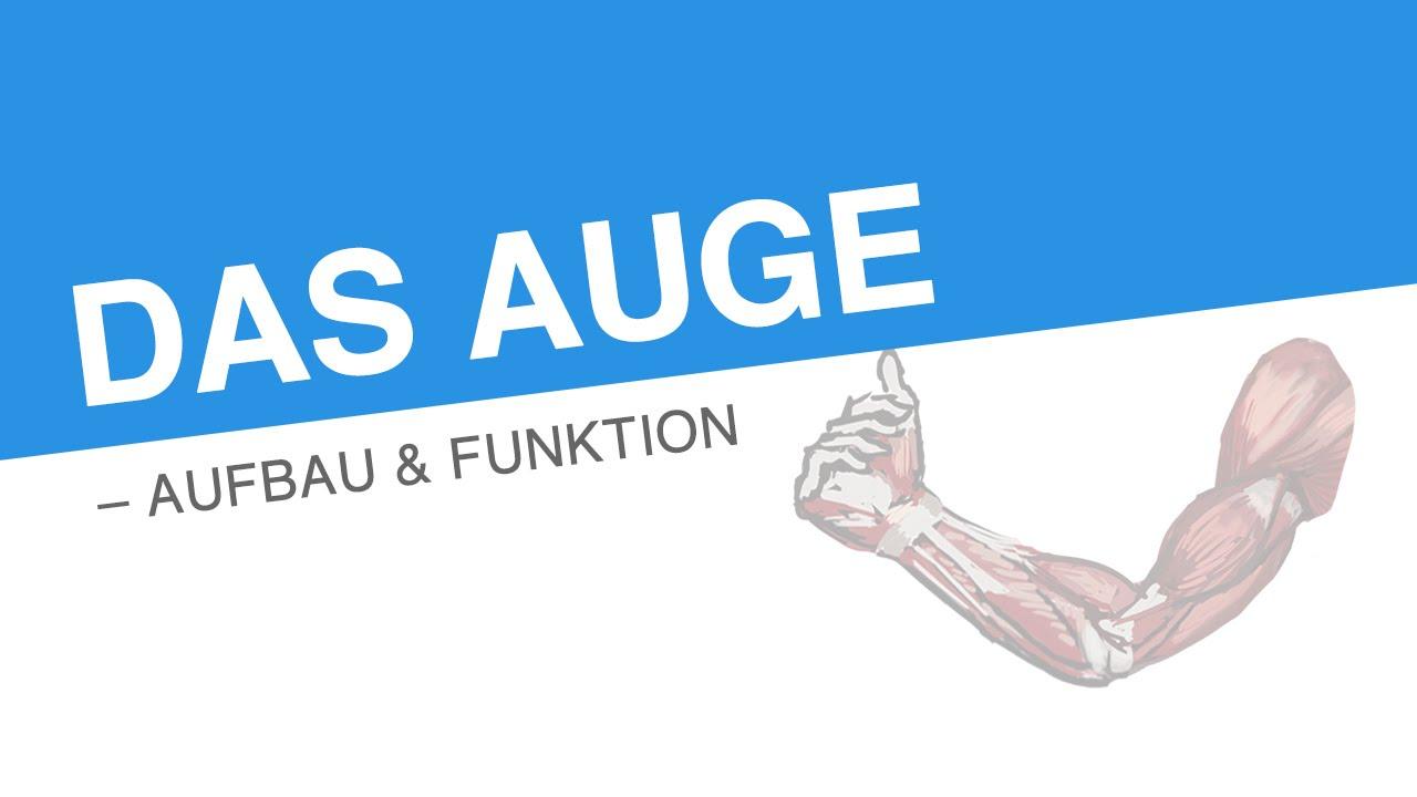 DAS AUGE – AUFBAU & FUNKTION | Biologie | Biologie des Menschen ...