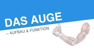 DAS AUGE – AUFBAU & FUNKTION | Biologie | Biologie des Menschen (Mittelstufe)