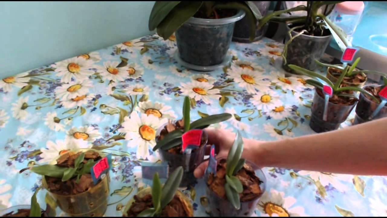 Интернет заказ орхидей - YouTube