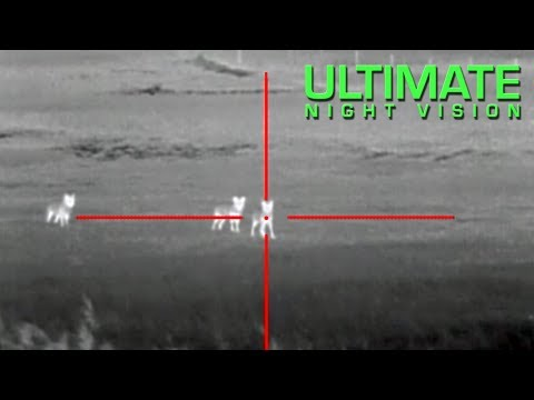 Coyote Hunting With Thermal - 13 Coyotes Down With The ATN ThOR Thermal Scope