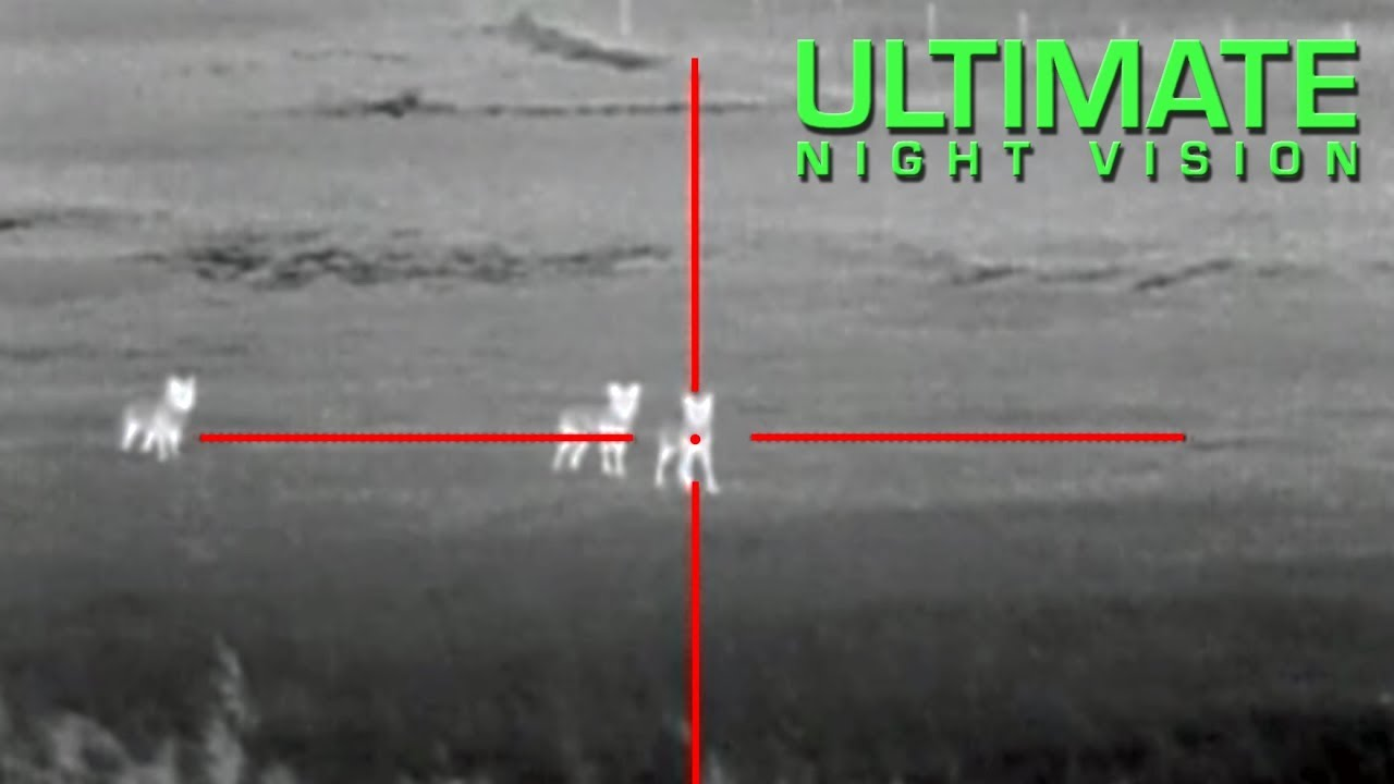 thermal hunting scope predator coyote night scopes coyotes atn thor using tips infrared imagery