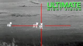 Coyote Hunting with Thermal - 13 Coyotes Down with the ATN ThOR Thermal Scope thumbnail